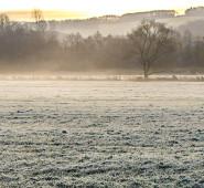 霜の降る早朝
