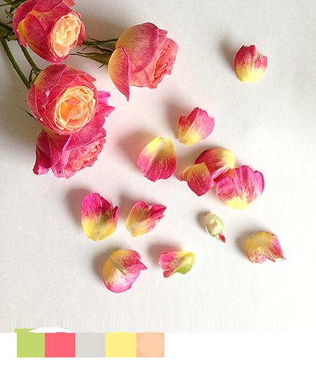春のバラの写真とカラーパレット