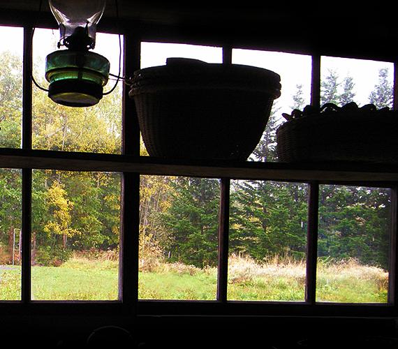 窓越しの緑の写真